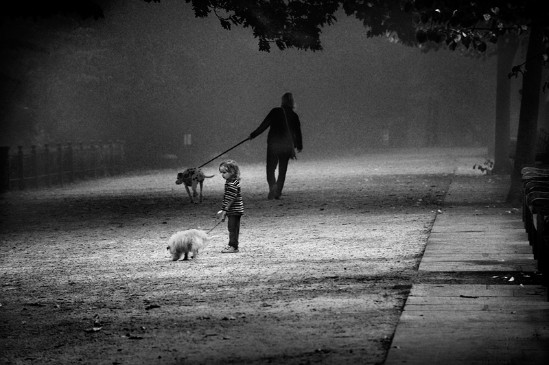A walk in the morning fog, England:Black and White Photo-335