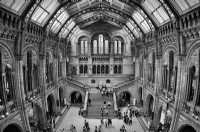 Natural History Museum London:Black and White Photo-294