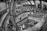 Fisheye lens - Natural History Museum in London:Black and White Photo-310