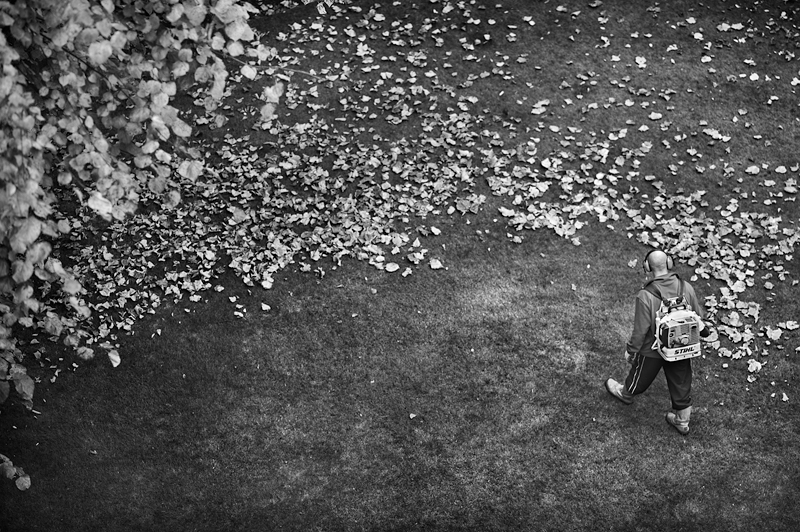 Autumn leaves:Black and White Photo-469