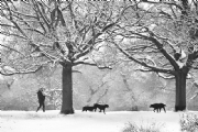 Snowing in Richmond Park:Black and White Photo-489