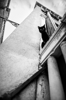 Black cat in Venice Italy:Black and White Photo-734