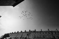 Birds in the sky in Bath:Black and White Photo-747